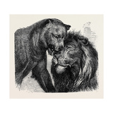 The Kiss of Peace, Zoological Gardens Giclee Print