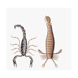 Close-Up of the Fossils of Two Scorpions Giclee Print