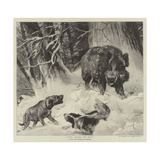 The Boar at Bay Giclee Print