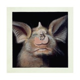 Close-Up of a Bat's Face Giclee Print