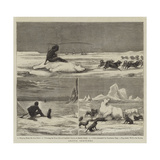 Arctic Sketches Giclee Print