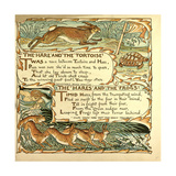 The Hare and the Tortoise the Hares and the Frogs Giclee Print