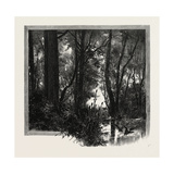 Banks of the Red River, Canada, Nineteenth Century Giclee Print