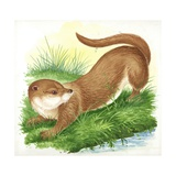 Otter Lutra Giclee Print