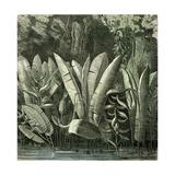 Ucayali Peru 1869 Giclee Print