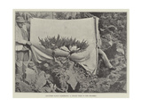 Japanese Fancy Gardening, a Dwarf Tree in the Rockery Giclee Print
