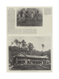 The Rising in North Borneo Giclee Print