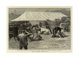 The Old English Mastiff Club Show at the Crystal Palace Giclee Print
