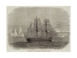 The Truelove, of Hull, the Last of the Sailing Whalers Giclee Print