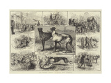 The Coursing Meeting at Altcar, Near Liverpool Giclee Print