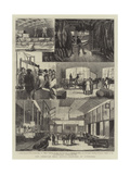 The American Meat Supply, Sketches at Liverpool Giclee Print