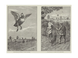 Partridge Shooting in Norfolk Impression giclée