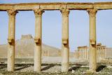 Palmyra Ruins - Syria Photographic Print by  adwo