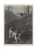 Spaniel Flushing a Woodcock Giclee Print