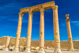Grec-Roman Columns of Palmyra, Syria Photographic Print by  siempreverde22