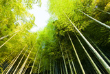 Bamboo Forest Photographic Print by  06photo