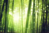 Bamboo Forest Photographic Print by Iakov Kalinin