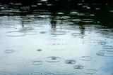 Rainy Weather Photographic Print by Dmitry Naumov