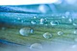 Abstract Water Drop on Flower Fresh Color Fotografisk trykk av  queen21