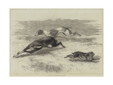 Coursing, the First Turn Giclee Print
