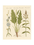 Commercial and Medical Plants Giclee Print
