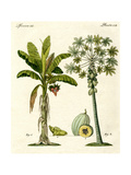 Plants from Hot Countries Giclee Print