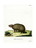 Three-Banded Armadillo Giclee Print