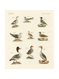Different Kinds of Waterbirds Reproduction procédé giclée