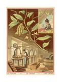 Cocoa Giclee Print