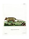 Nine-Banded Armadillo Giclee Print