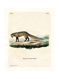 White-Tailed Mongoose Giclee Print