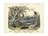 Amphibians and Fishes, C.1860 Giclée-Druck