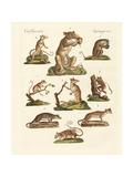 Various Kinds of Marsupials Giclee Print