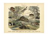 Mammals, C.1860 Giclee Print