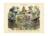 Butterflies, C.1860 Giclee Print