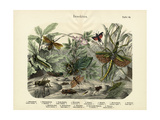 Insects, C.1860 Giclee Print