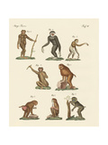 Eight Kinds of Monkeys Giclee Print
