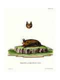 Seba's Short-Tailed Bat Giclee Print