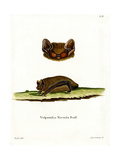Common Noctule Bat Giclee Print