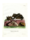 Greater Spear-Nosed Bat Giclee Print