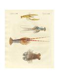 Strange Crabs Giclee Print