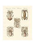 Molluscs or Soft Worms Giclee Print
