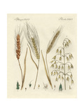Kinds of Grain Giclee Print