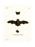 Lesser Noctule Bat Giclee Print