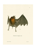 Parnell's Mustached Bat Giclee Print