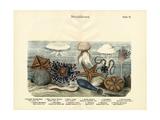 Echinoderms, C.1860 Giclée-tryk