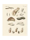 Strange Worms Giclee Print