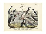 Birds, C.1860 Reproduction procédé giclée