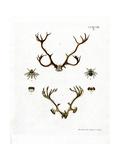 Reindeer Antlers Wydruk giclee