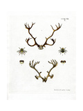 Reindeer Antlers Giclee Print